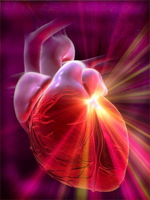 Problemas, enfermedades y secuelas relacionadas con la Obesidad: Sistema Cardiovascular