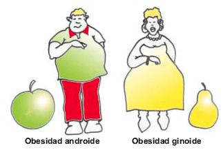 Tipos de obesidad: Clasificación de la obesidad según síntomas, enfermedades relacionadas, tratamientos más adecuados, etc.